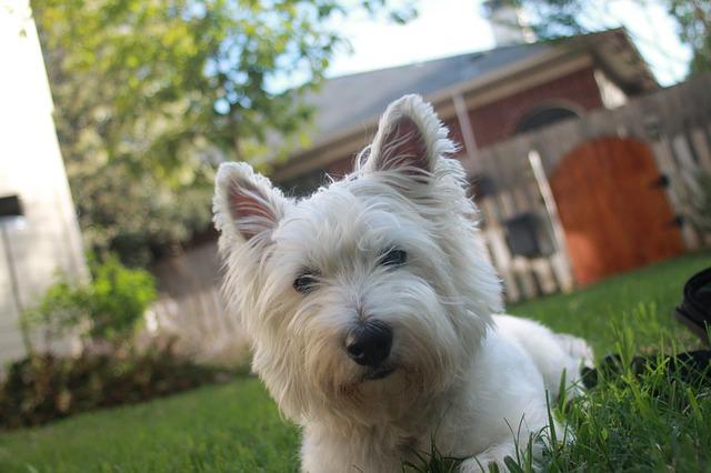 terrier-722643_640