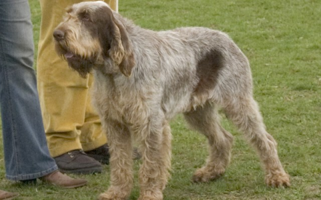The 10 Most Low-Maintenance Dog Breeds