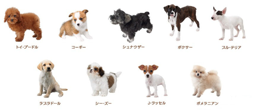 Japanese Dog Breeds With Pictures Dog Breeders Guide